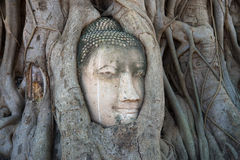The ancient head of Buddha is ingrown into the roots of a tree close up. Ruins of the ancient temple of Ayutthaya Wat, Thailand Royalty Free Stock Photography