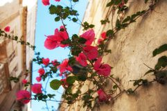 Ancient historical island Malta. Parks, plants and flowers. Old city. Ancient historical island Malta. Medieval old town. Parks, plants and flowers. Old city Royalty Free Stock Photography