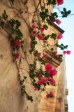 Ancient historical island Malta. Parks, plants and flowers. Old city. Ancient historical island Malta. Medieval old town. Parks, plants and flowers. Old city Stock Images