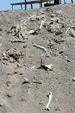 Ancient Human Bones. Chauchilla, an ancient cemetery in the desert of Nazca, Peru. The remains of many people, some still with long hair, can be seen. Here many stock photos