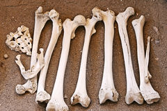 Ancient Human Bones - Femur and Jaw. A pile of human bones in Chauchilla, an ancient cemetery in the desert of Nazca, Peru. The remains of many people, some royalty free stock photos