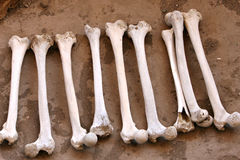 Ancient Human Bones. A pile of human bones in Chauchilla, an ancient cemetery in the desert of Nazca, Peru. The remains of many Stock Image