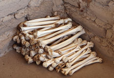 Ancient Human Bones stock photos