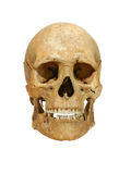 Ancient human skull. Real ancient human skull on clear white background. Cliping path incuded royalty free stock images