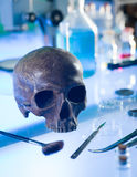 Ancient human skull. Close-up of ancient human skull set up on a table in a forensics laboratory stock photos