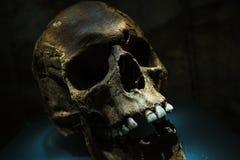 Ancient Human Skull Royalty Free Stock Photos