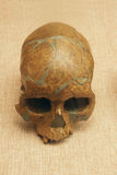 Ancient human skull fossil. The close-up of skull fossil of Upper Cave Man royalty free stock images