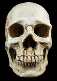 Ancient human skull replica Stock Photo