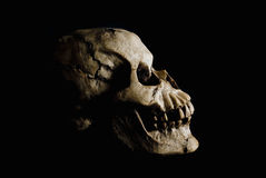 Ancient Human Skull in Shadow. Side view (profile) of ancient human skull in deep shadow royalty free stock photography