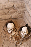 Ancient Human Skulls with Braided Hair Stock Images