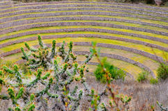Ancient Inca circular agricultural terraces at Moray used to study the effects of different climatic conditions on crops. Stock Photography