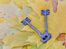 Ancient keys lie on yellow maple autumn leaves.  Stock Photography