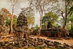 Ancient Khmer architecture. Panorama view of Ta Prohm temple wit stock photo