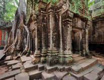 Ancient Khmer architecture. Ta Prohm temple at Angkor, Siem Reap, Cambodia. Ancient Khmer architecture. Ta Prohm temple with giant banyan tree at Angkor Wat royalty free stock images