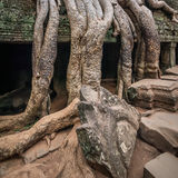 Ancient Khmer architecture. Ta Prohm temple at Angkor, Siem Reap, Cambodia Stock Photos