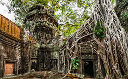 Ancient Khmer architecture. Ta Prohm temple with giant banyan tr stock image