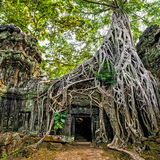 Ancient Khmer architecture. Ta Prohm temple with giant banyan tr royalty free stock photos
