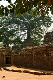 Ancient Khmer temple Ta Prohm Royalty Free Stock Image