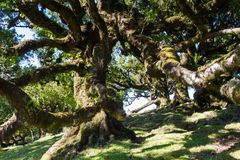 Ancient laurel forest in the sunshine. Madeira, Portugal stock images
