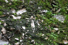 Free Ancient Limestone Wall Stock Photo - 54364550