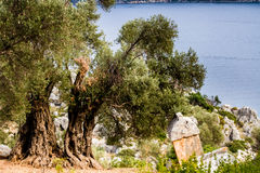 The ancient Lycian tomb near the ancient half-dried olives  in S Royalty Free Stock Image