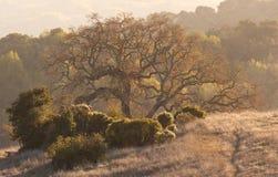 Ancient Majestic Tree Stock Photos