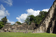 Ancient Mayan ruins. In Tikal Guatemala Royalty Free Stock Photos