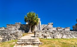 Ancient Mayan ruins at Tulum in Mexico. Ancient Mayan ruins at Tulum in the Quintana Roo State of Mexico royalty free stock photography