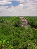 Ancient Mayan stone structure rising out of the jungle canopy at Calakmul, Mexico stock photos