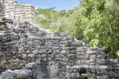 Ancient Mayan stone wall relics in Coba Ruins, Mexico Stock Images