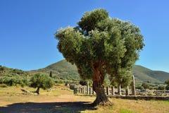 Ancient Messini Stock Photos