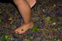 Ancient method to produce wine in which feet crush the grapes af Stock Image