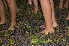 Ancient method to produce wine in which feet crush the grapes af Royalty Free Stock Photo