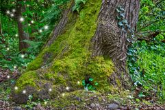 Ancient Mossy Tree in forest with fairy light sparkles. Large oak tree with moss and glowing fairy lights around the trunk Stock Photo