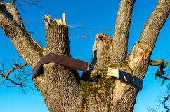 Ancient oak tree Royalty Free Stock Image
