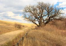 Ancient oak. Royalty Free Stock Photography