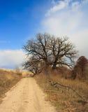 Ancient oak. Stock Photos