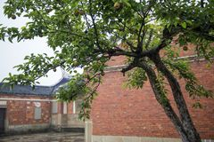 Ancient old house beside a tree. Trees with fruits on a background of the old house royalty free stock photos