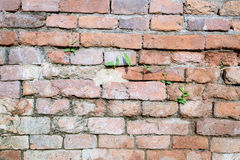 Ancient old red brick wall fragment with plant background, textu Stock Image