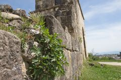 Ancient old stone wall, time destroys and age. Green grass Royalty Free Stock Photo