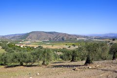 Ancient olive groves and mountains of Ansalusia Stock Photo