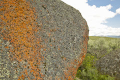 Ancient orange lichens growing on rocks in Centennial Valley near Lakeview, MT Stock Photos