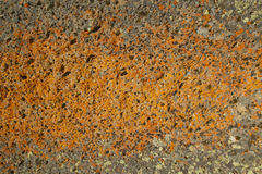 Ancient orange lichens growing on rocks in Centennial Valley near Lakeview, MT Royalty Free Stock Photo