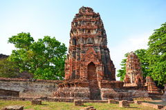 Ancient pagodas in Ayutthaya. Brown pagodas and big trees Royalty Free Stock Photography