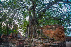 Ancient palaces against the evening sky. Ayutthaya Thailand. Stock Photo