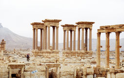 Ancient palmyra Royalty Free Stock Images