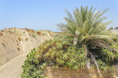 The ancient park in Caesarea, Israel Ancient fortress and palm trees. Royalty Free Stock Photo