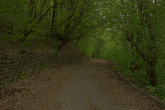 Ancient path. Ancient forgotten path in forest Stock Photography