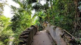 Ancient pathway through jungle in Thailand. royalty free stock image