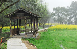 Ancient pavilion. Ancient wooden pavilion and coleseed field stock images